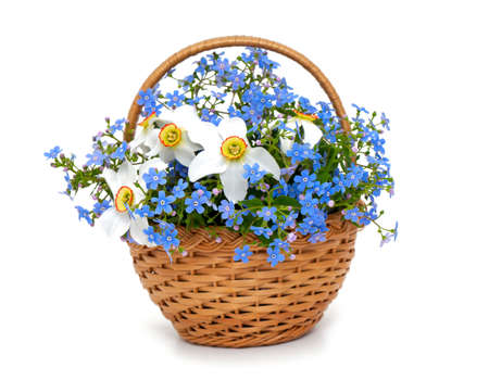 forget-me-not and narcissus flowers in a basket over white photo