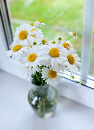daisies on windowsill photo
