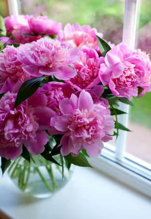 pink peonies on window sill photo