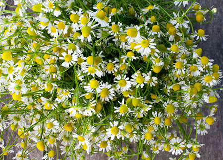 chamomile on wooden table photo