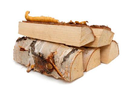 Brennholz aus Birke Standard-Bild - 20986369