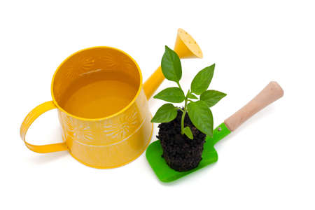 paprika plant, watering can and scoop photo