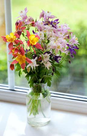 aquilegia: colorful columbines on windowsill Stock Photo