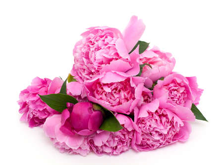 bunch of pink peonies isolated on white background photo