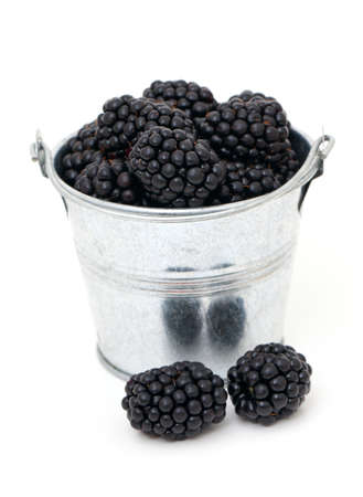 blackberries in a bucket isolated on white background photo
