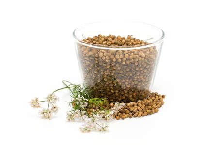 coriander seeds isolated on white background photo