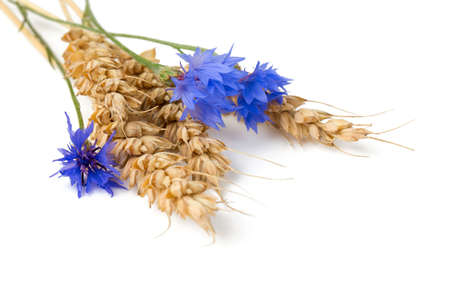 Bunch of cornflowers and wheat on a white background photo