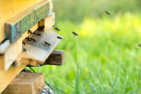bees in hive photo
