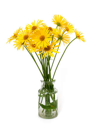 yellow daisies isolated on white background photo
