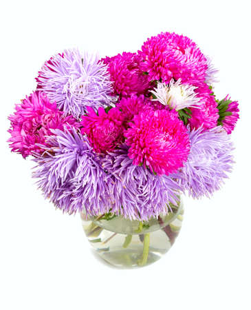 aster flowers isolated on white background photo
