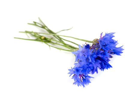cornflowers isolated on white background photo