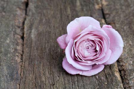single purple rose on wooden surface Stock Photo