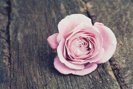 single purple rose on wooden surface photo