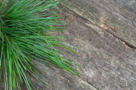 firry: twig of cedar tree on wooden surface Stock Photo