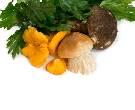 mushroom and parsley leaves photo