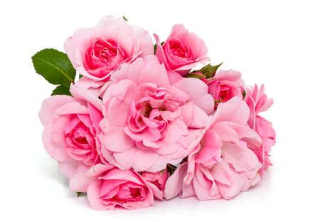 rosas rosadas: rosas rosadas aisladas en blanco Foto de archivo