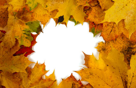 autumn leaf border Stock Photo - 22576331