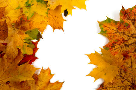 autumn leaf border Stock Photo - 22729988