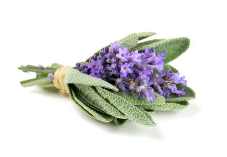 lavender and sage isolated on white Stok Fotoğraf