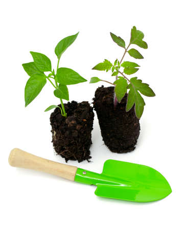 tomato and paprika seedlings and gardening tools over white photo
