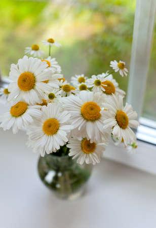 daisys: daisies on windowsill