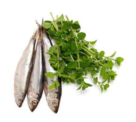 sprat: sprat fish and marjoram isolated on white background