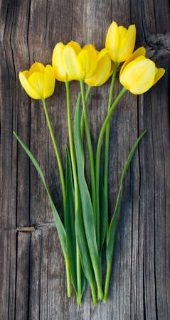 yellow tulips on wooden surface photo