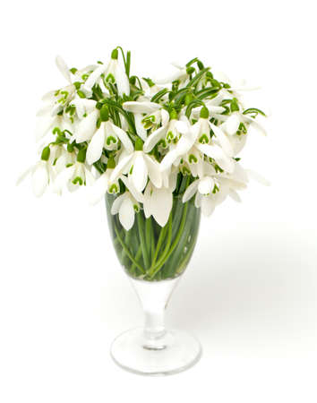 bouquet of snowdrops isolated on white background photo
