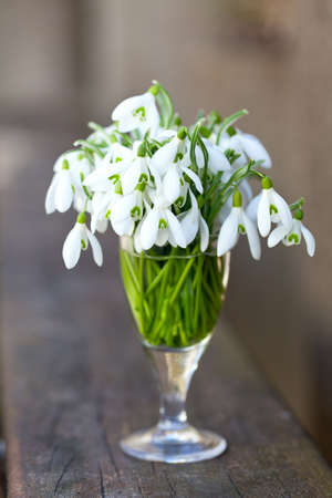 snowdrops in a glass on wooden surface photo