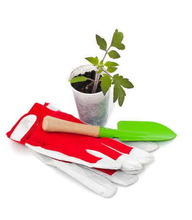 tomato seedling, garden shovel and gloves photo