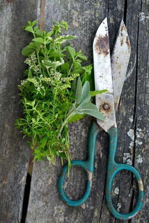 fresh herbs and scissors on wooden surface photo