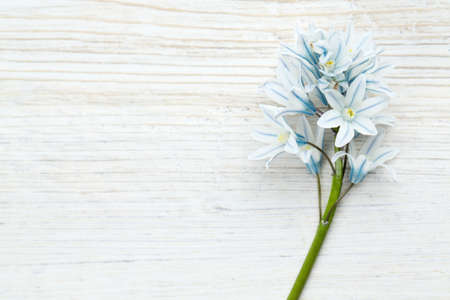 beautiful spring flowers on wooden surface photo