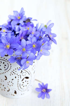 hepatica nobilis flowers on wooden surface photo