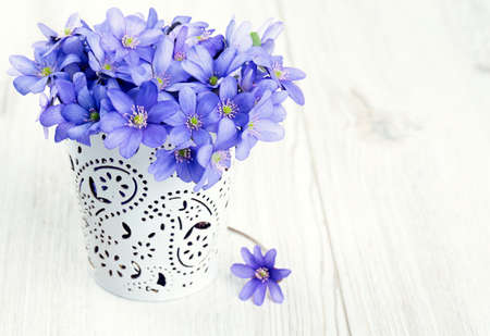 hepatica: hepatica nobilis flowers on wooden surface Stock Photo