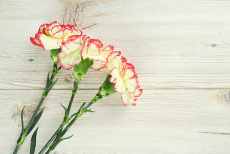 beautiful carnation flowers on wooden surface photo