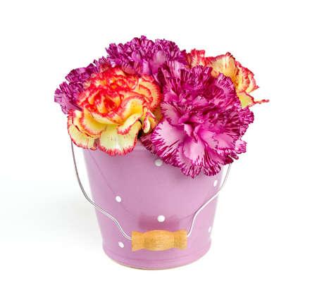 beautiful carnation flowers photo