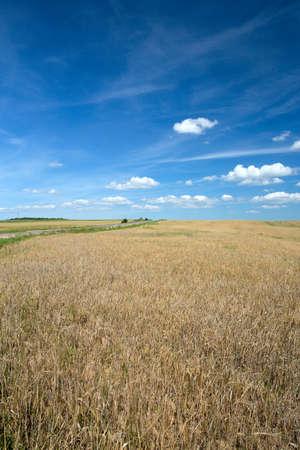 beautiful wheat field photo