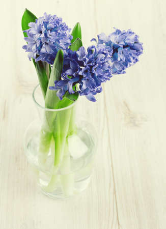 blue hyacinth in a glass vase on wooden surface photo