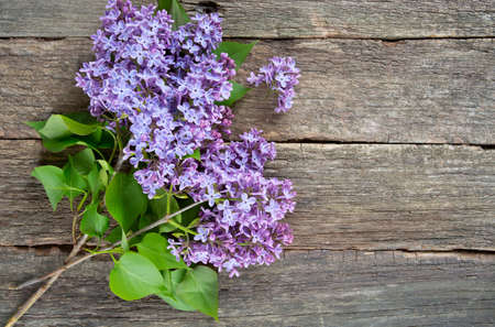 beautiful lilac on dark wooden surface photo