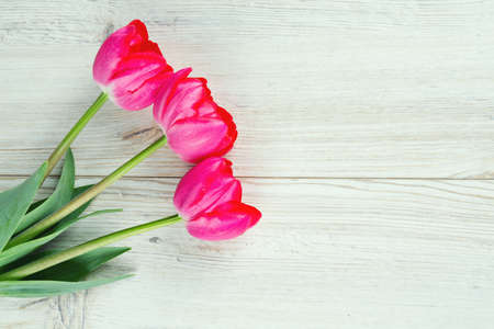 pink tulips on wooden surface photo