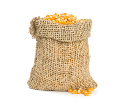 corn in burlap bag isolated on white photo