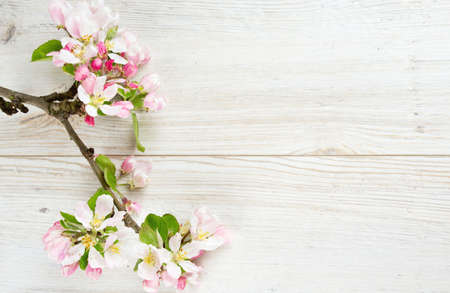 apple blossoms on white wooden surface Stock Photo