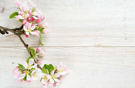 Fleurs de pomme sur une surface en bois blanc Banque d'images - 28366150