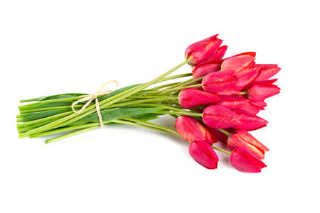 bunch of red tulips isolated on white photo