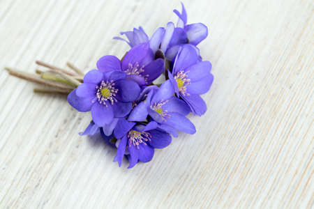 liverwort: liverwort flowers on wooden surface