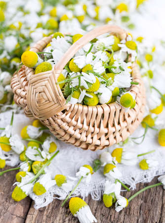 chamomile flowers in basket on wooden surface photo