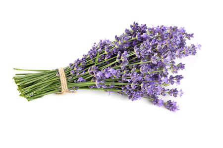 bunch of lavender isolated on white Foto de archivo