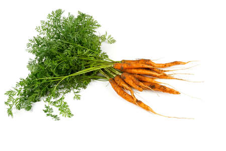 freshly picked carrots isolated on white photo