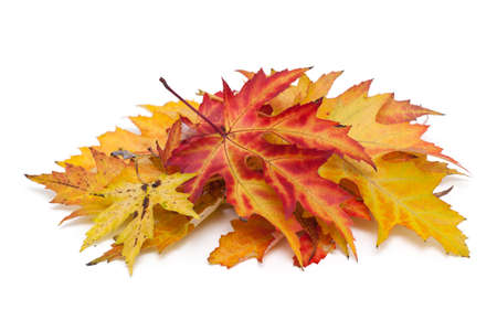 autumn leafs photo