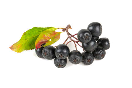 black chokeberry photo